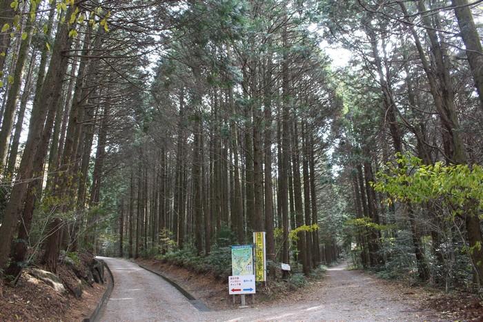 昭和の森 猫石側 分かれ道