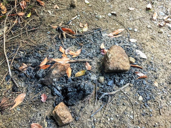 昭和の森 キャンプ 直火