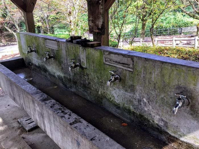 昭和の森 キャンプ 洗い場
