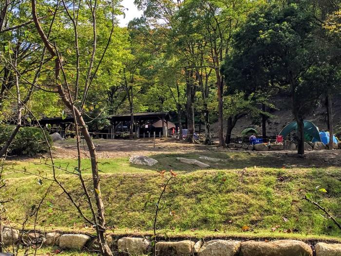昭和の森 キャンプ メインスペース
