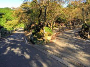 昭和の森 キャンプ場内 分かれ道