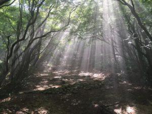 昭和の森 雰囲気