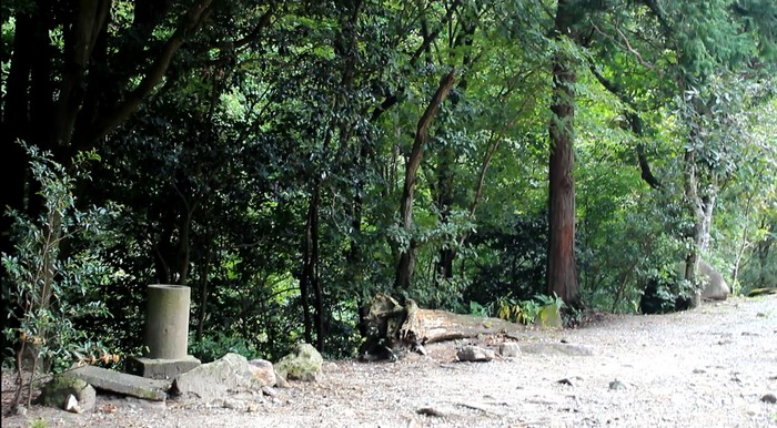昭和の森 キャンプ 林道横